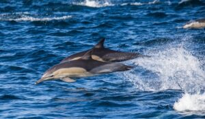 dolphin-tours-300x174.jpg