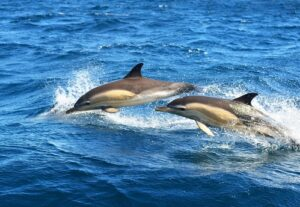 dolphin-cruise-300x207.jpg