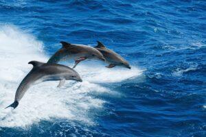 dolphin tour north myrtle beach