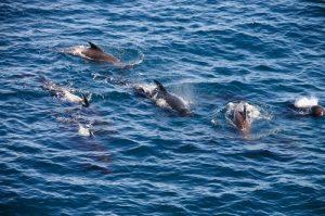 Jet ski dolphin watch tour