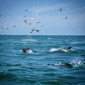 Myrtle Beach Dolphin Cruises