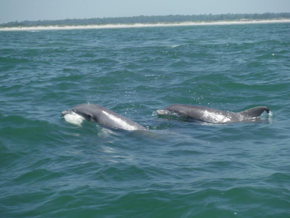 dolphin cruises Myrtle Beach