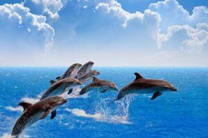 dolphin-watch-300x200.jpg